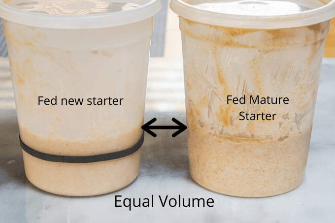 Comparison of new bread starter and mature bread starter in quart containers showing their levels start the same.