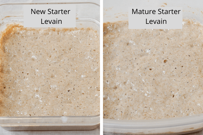 Comparison of Levains made with a new starter and mature starter